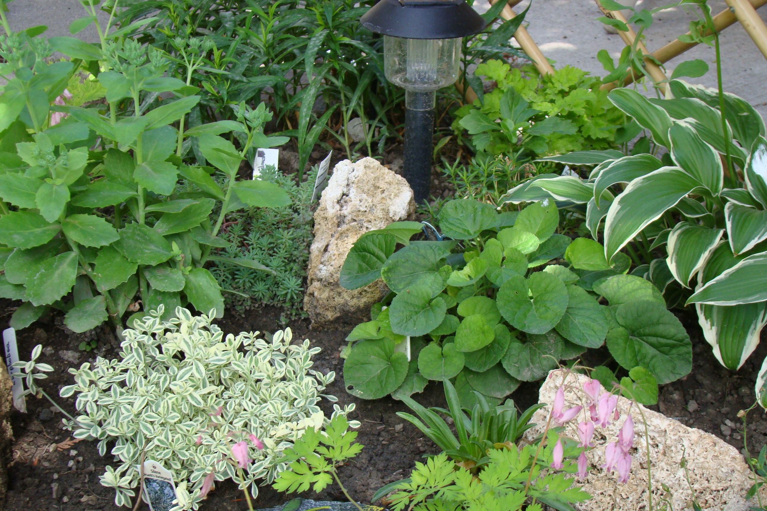 Landscaping Rocks Names : Garden rocks with names http